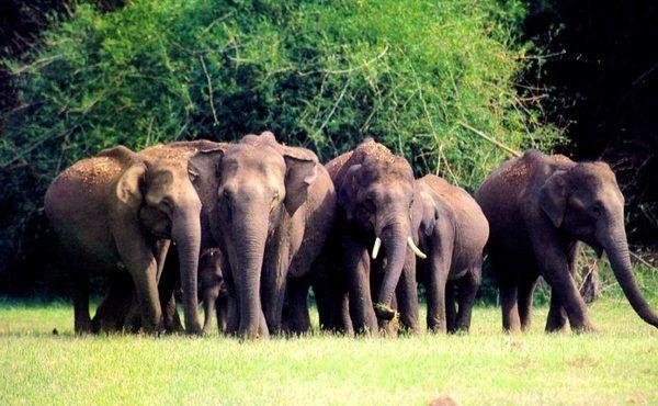 Thekkady, Kerala, India