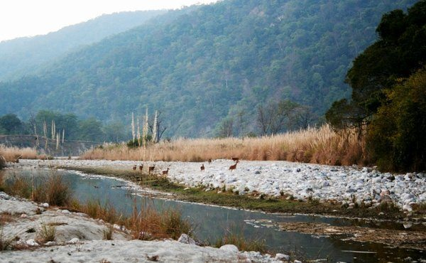 Corbett, Uttaranchal, India