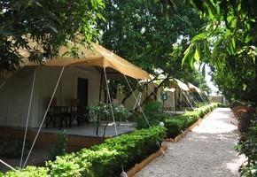 Lion Safari Camp