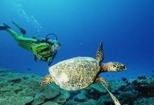 Coral Hideaway in the Arabian Sea