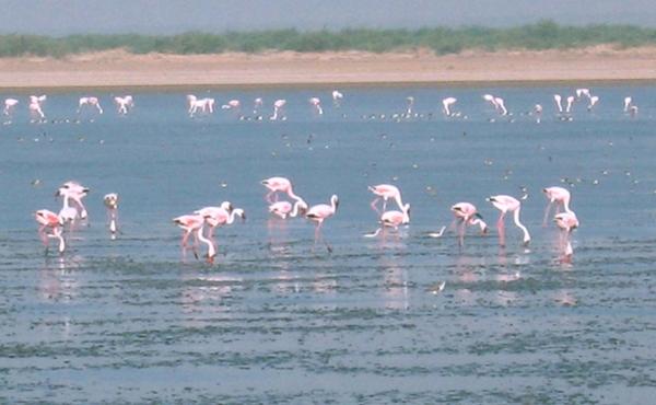 Custom Tour: Wildlife of India